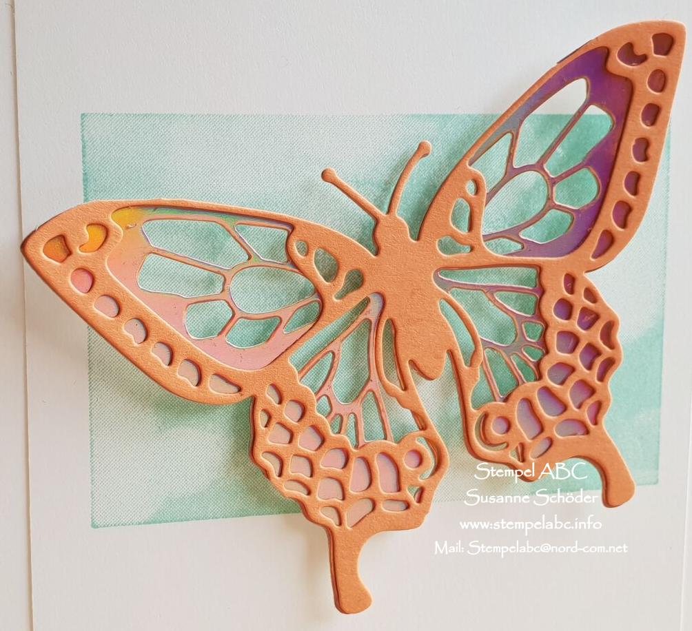 Schmetterlinge gegen die Kälte Teil 3